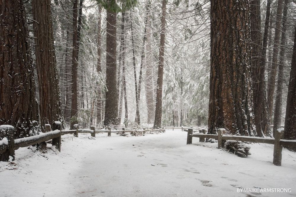 Snowy Path in Yosemite Valley · Photography by Maike Armstrong