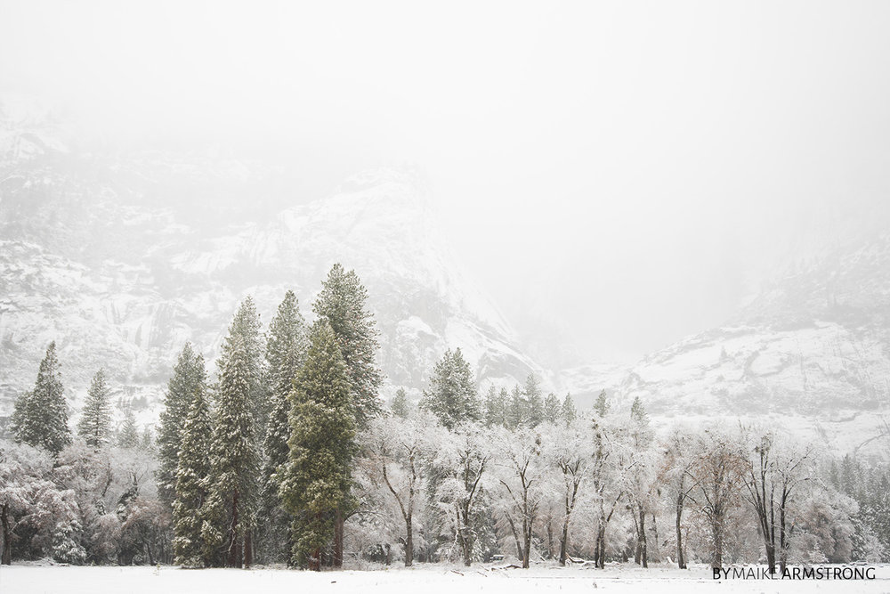 Green and White Tree Line of Yosemite Valley in Winter · Photography by Maike Armstrong