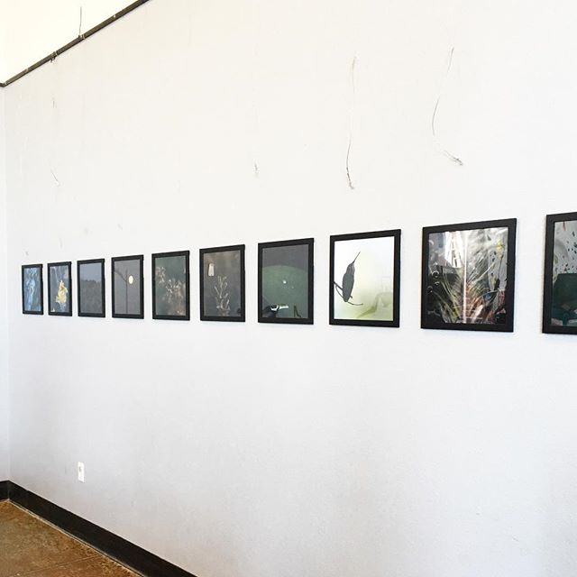 """""""Secret Worlds"""" – a selection of my nature shots – is now up at Metalmark in Fresno. Come climb and check out the gallery! 😊"""