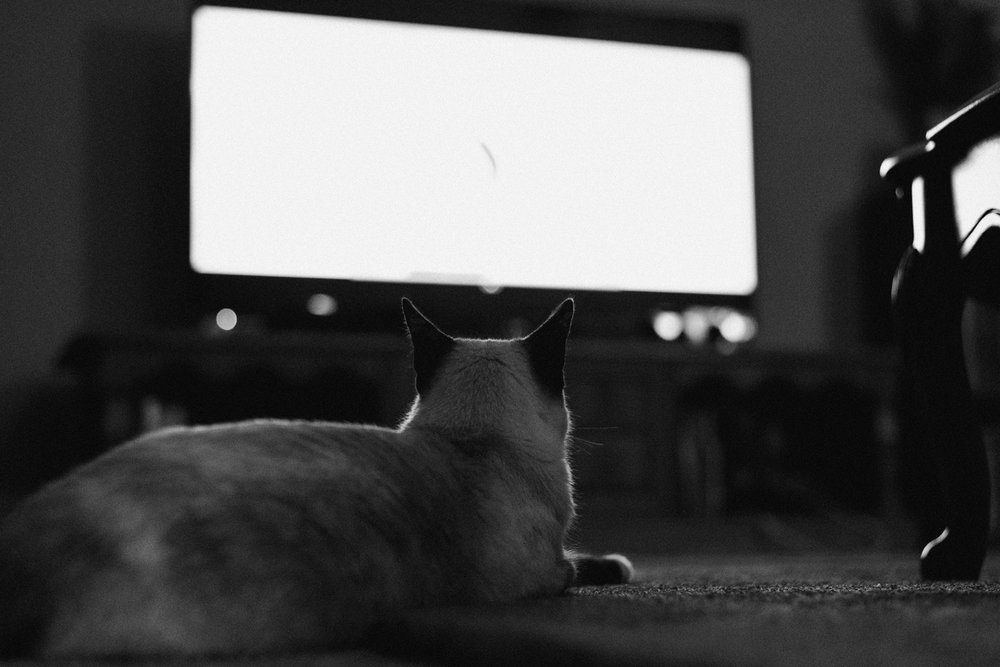 August-2017-Finley-watches-TV.jpg