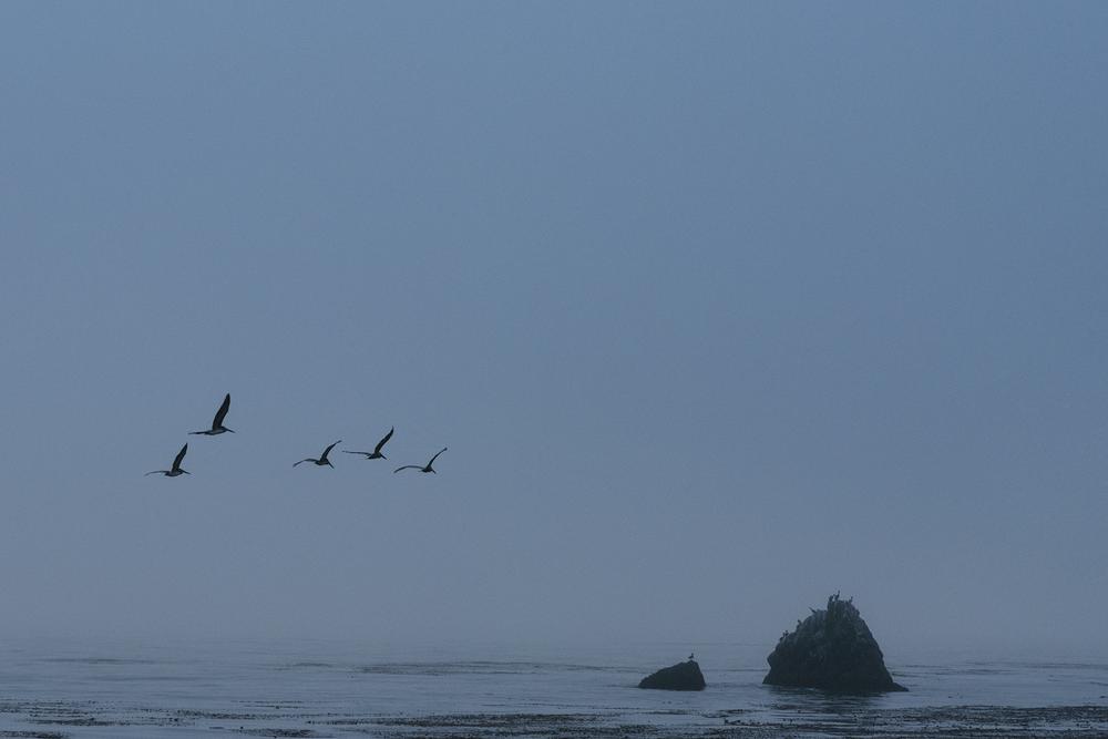 Pelicans at Limekiln State Park, Big Sur, US