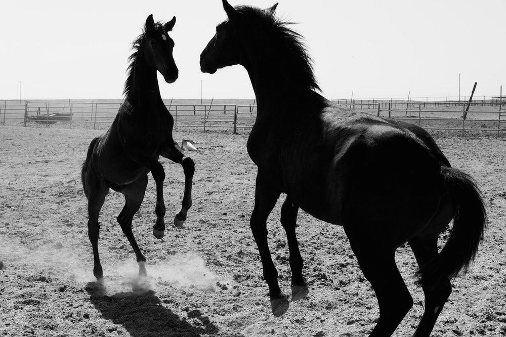 WEB-Foals-Madera-46.jpg