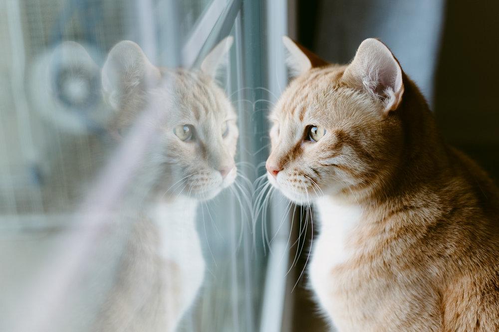 Cats-Taz-Milo-Hathaway-WEB01.jpg