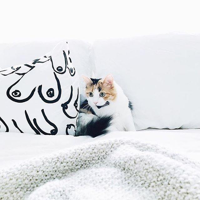 When your cat and boob pillow are accent pieces.  Photo: @hiaj . . . . #apartmentideas #blackandwhite #homedecorideas #catsofinstagram #boobpillow