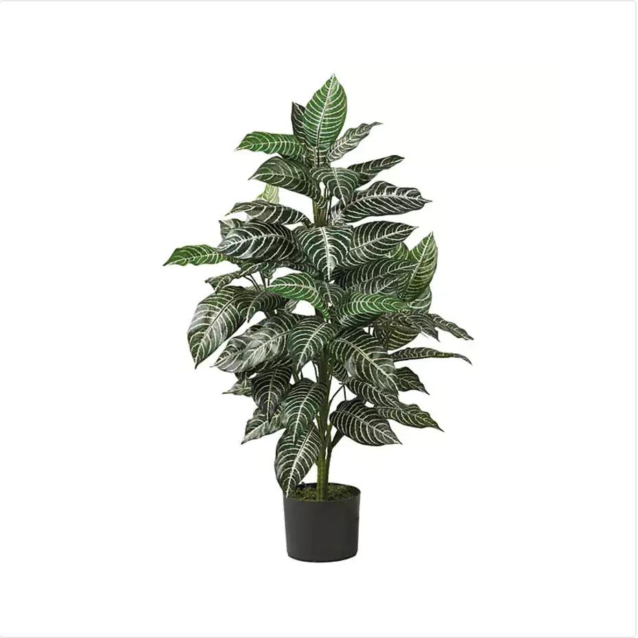 zebrasilkplant.png