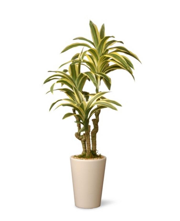 Artificial Dracaena Plant.png