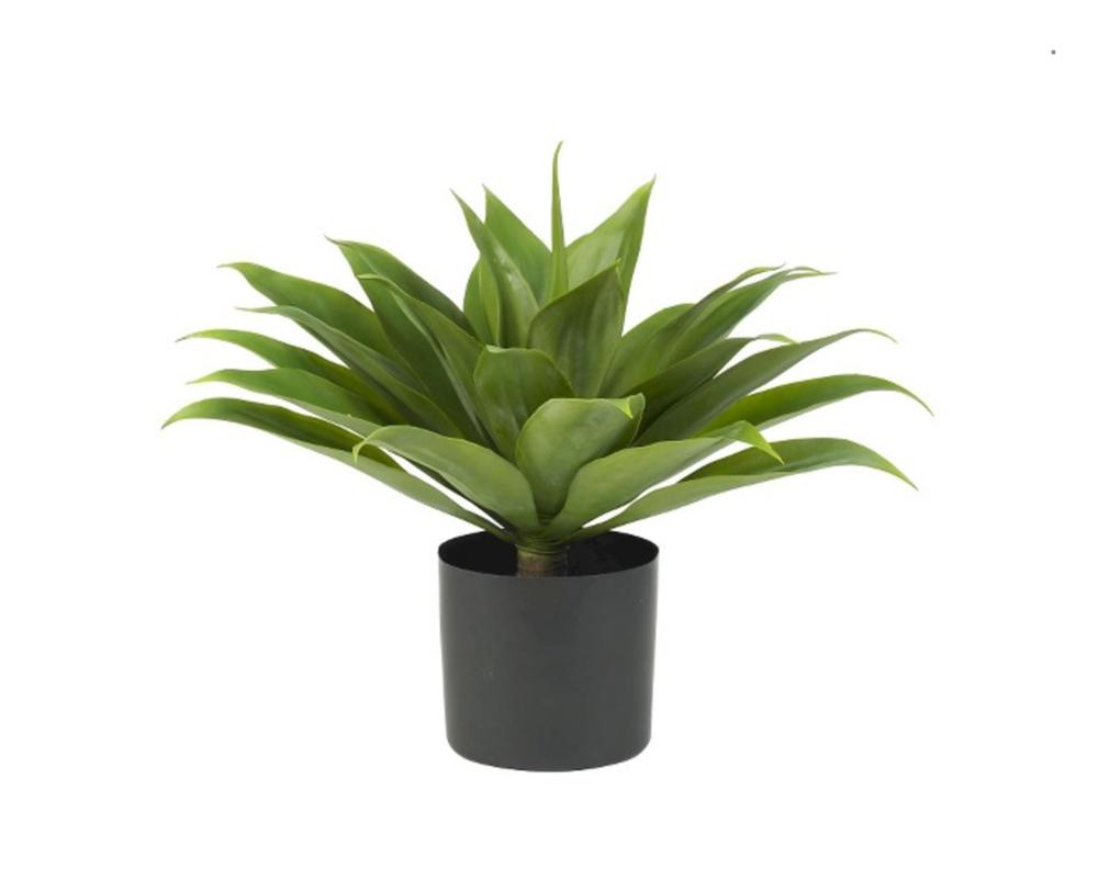agavesilkplant.png