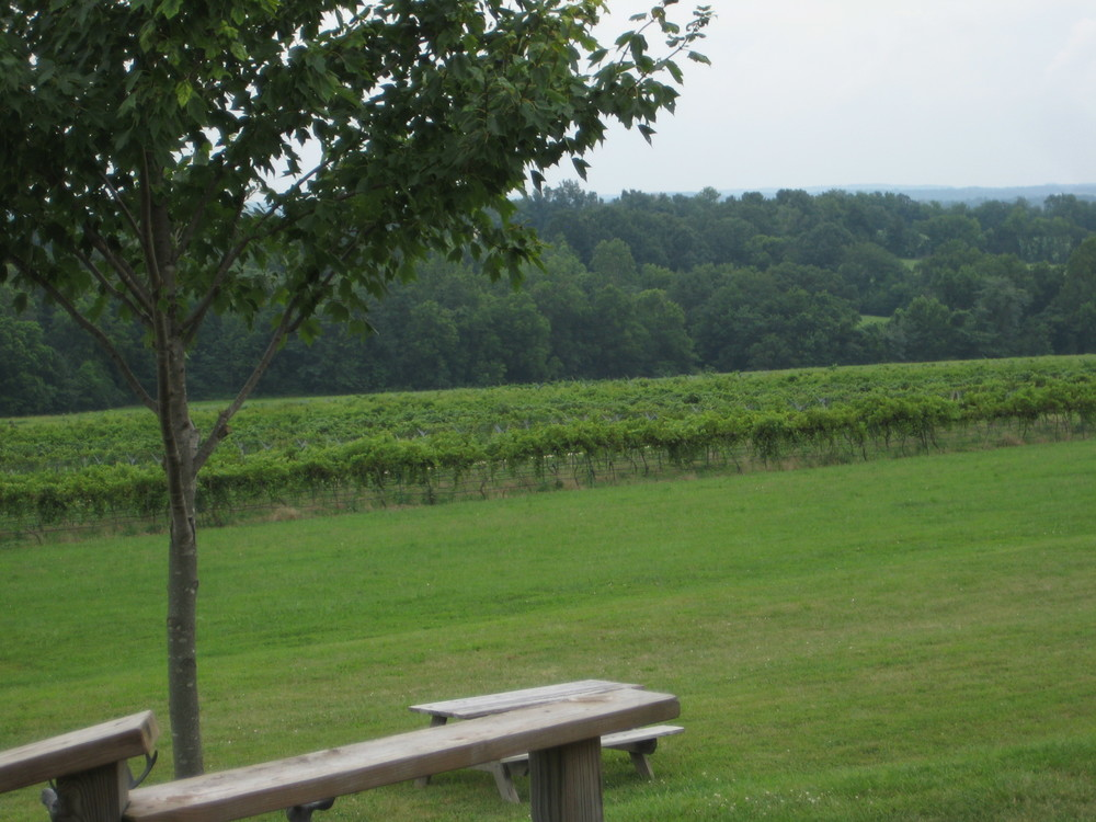 A view of the vines at Robller Vineyard & Winery