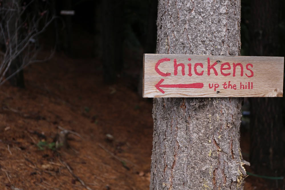 Chicken coops can be found at AniChe Cellars