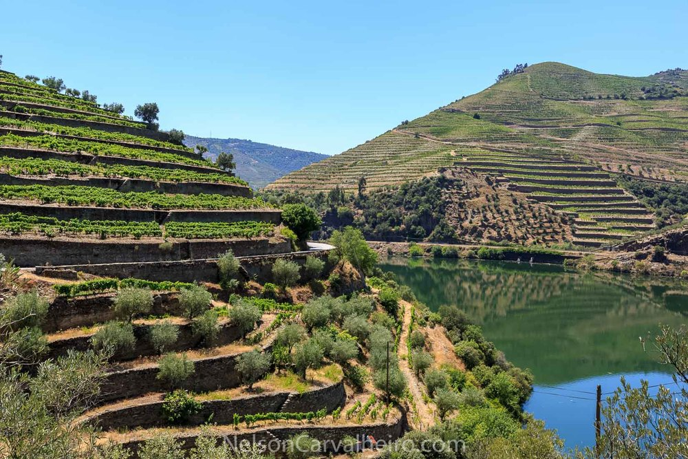 Douro Valley | Photo by: Nelson Carvalheiro