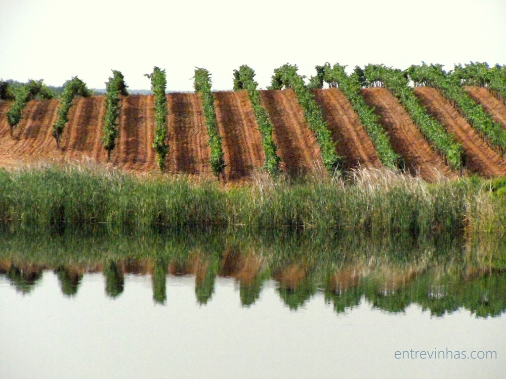 Herdade do Sobroso -- Alentejo is  the largest wine region in southern Portugal, where one will find long rows of vines beside olive trees.