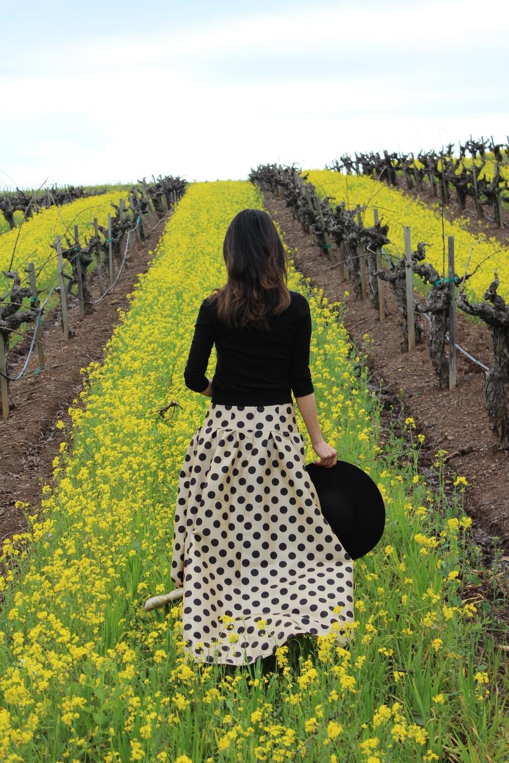Walking through the wild mustard at BR Cohn Vineyards in Glen Ellen, CA