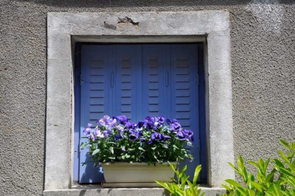 In full bloom, Villars Fontaine, France