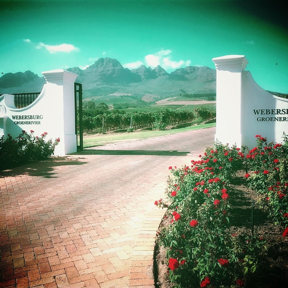 Behind the Webersburg gates lies one of the most relaxing wineries in Stellenbosch and the unique buffalo sanctuary. I was only able to see them from a distance, as they were asleep.