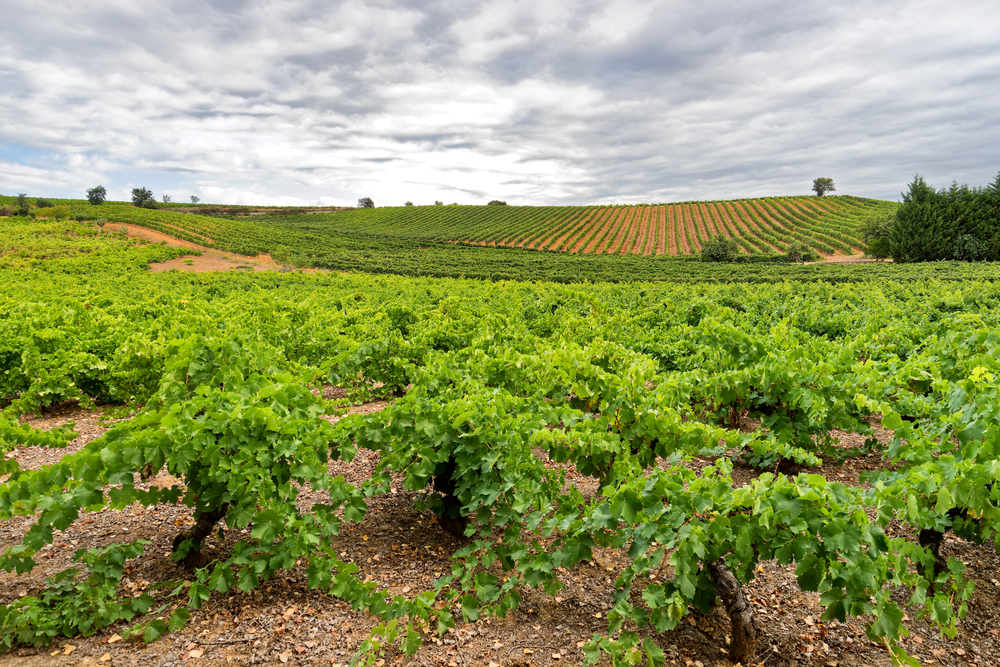 Typical Bierzo vineyards' Landscape | Photo Credit: Benoît Lefèvre - Vino2Travel