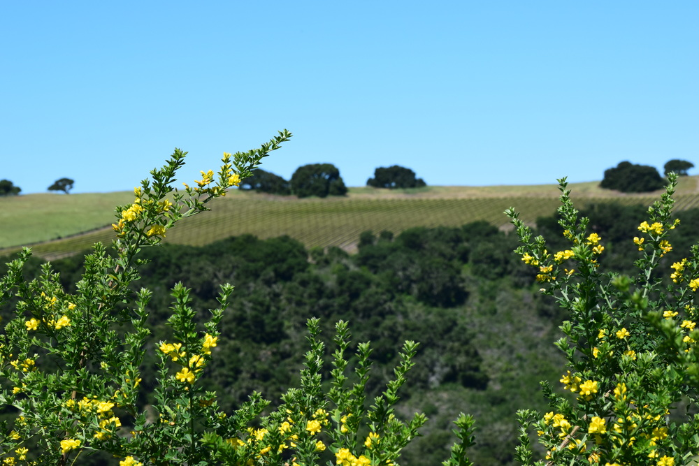 The beautiful view of Carmel Valley Village     Photo credit Gabriel Manzo