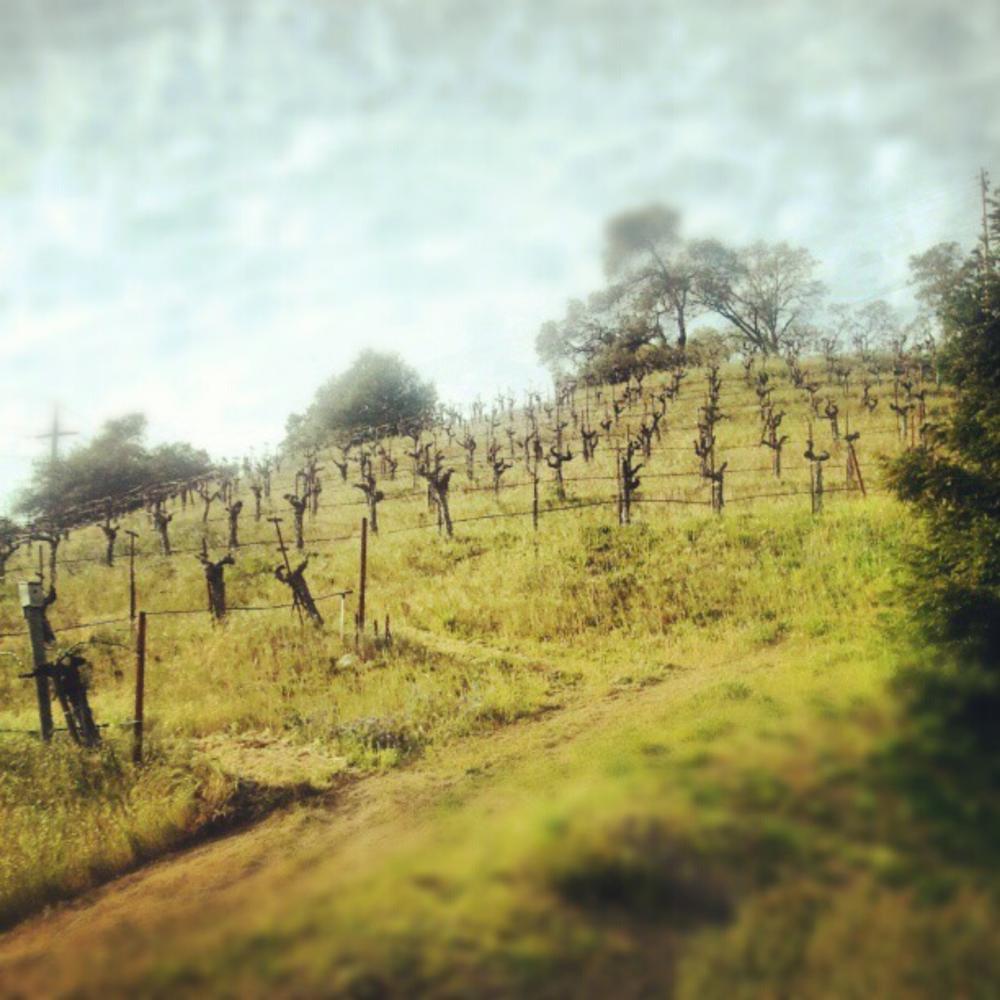 Robert Stinskey Vineyards -- Photo credit Zarah Miaral