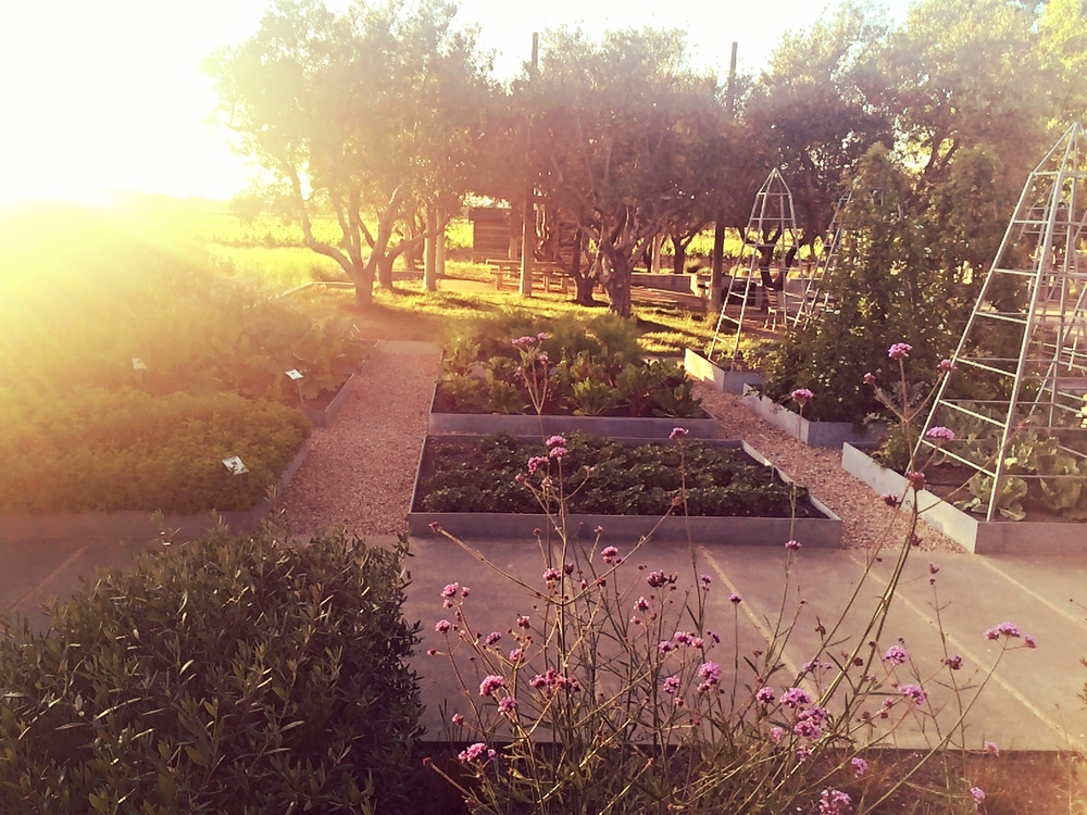 Wine Tourist - California Rose - Raised garden beds at Medlock Ames - Photo credit Leslie Rosa