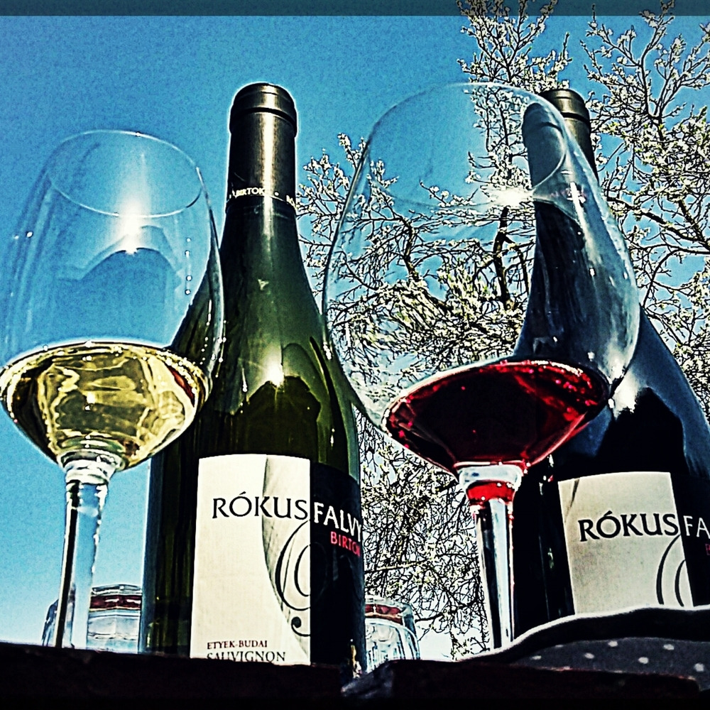 Rókusfalvy cellar is in Etyek, a small village close to the capital, 25 km from Budapest. We call it Buda's Winegarden. They usually work with Sauvignon Blanc and Pinot Noir, but of course, you can find Hungarian wine grapes as well...