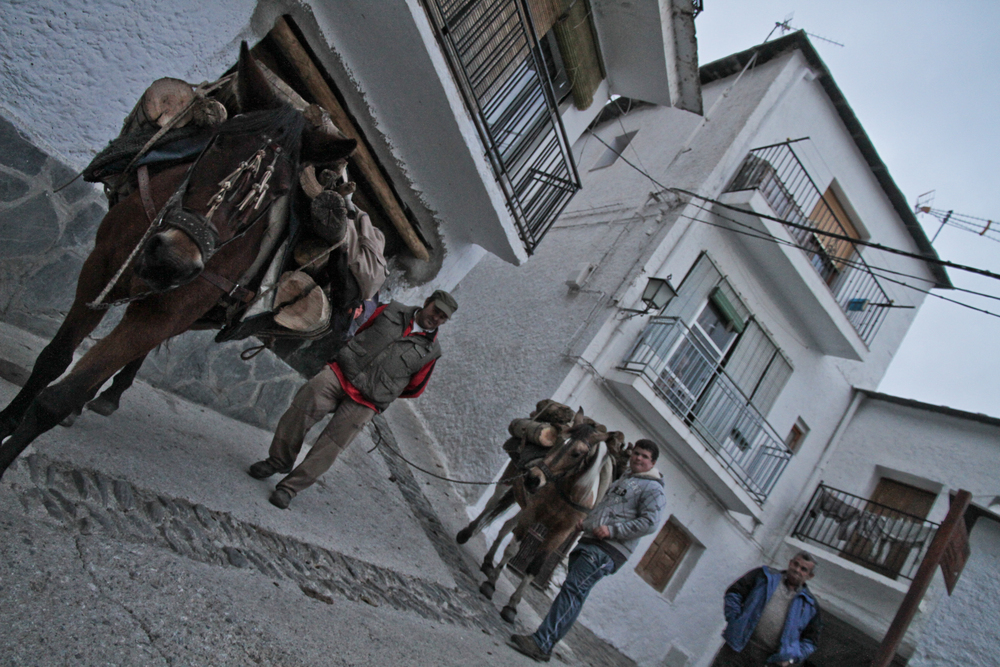 Donkey At Lajarón