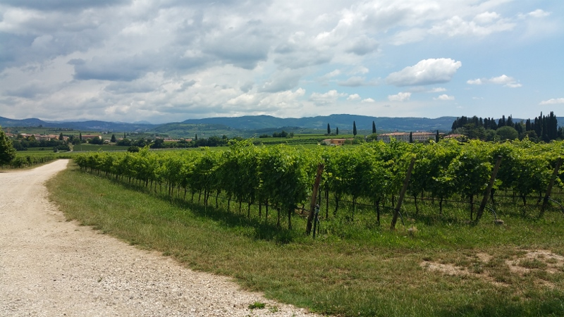 The Vineyards of Marchei Fumanelli