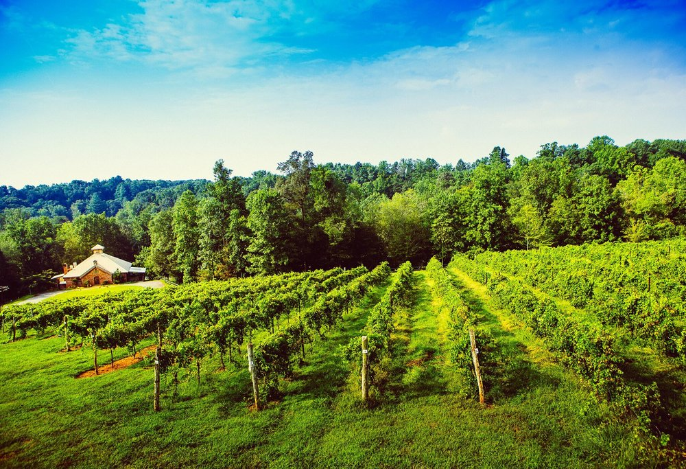 Elkin Creek Vines | Photo Credit: Surry County Tourism