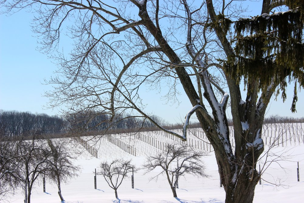 Penns Wood Winery all pretty in the winter.