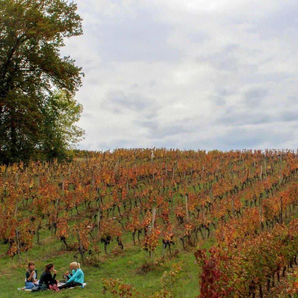 Fall Vineyard Picnic in Cahors, France, October 2016