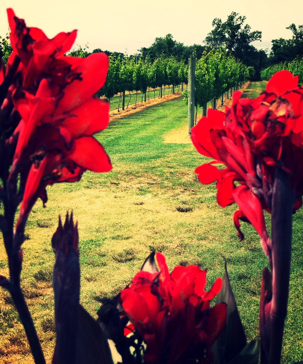 Summertime at  Willow Creek Farm and Winery