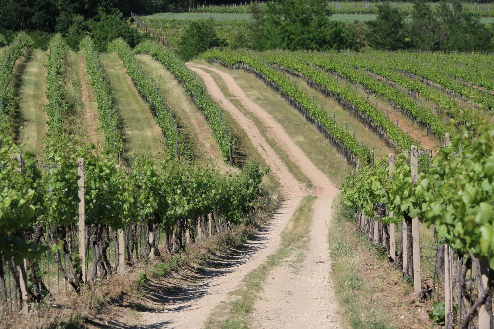 A ride through the vineyards