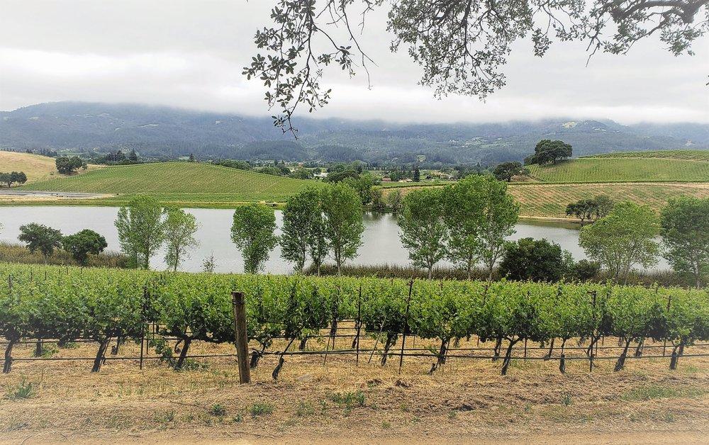 Summer vineyard1.jpg