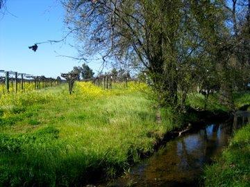 creek IMG_5914.jpg