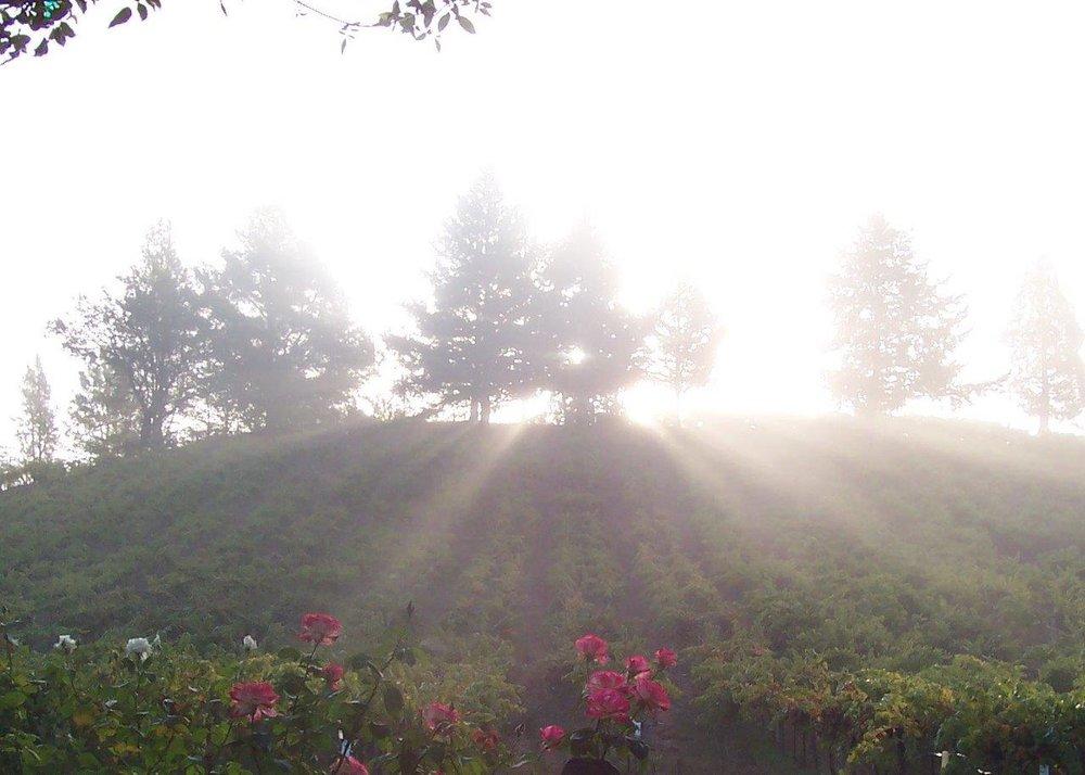 Acorn's Hill + Roses 100_0892.jpg