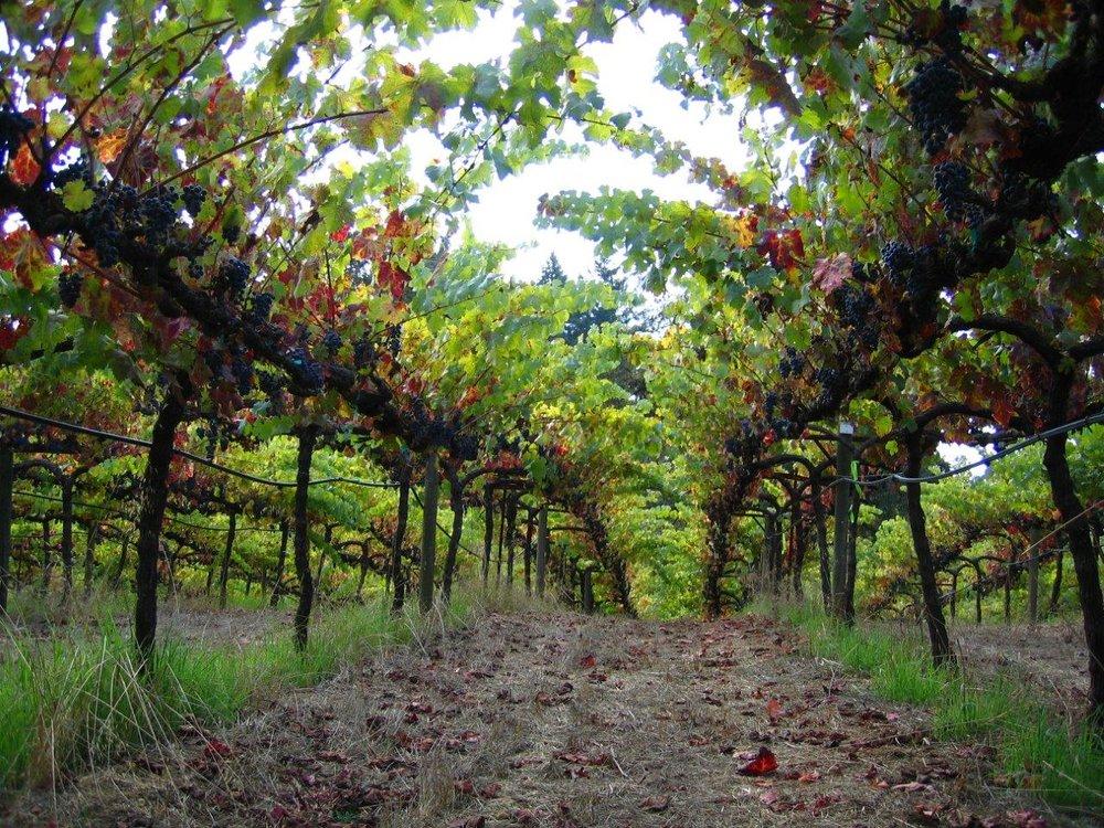 Acorn Winery (all photos courtesy of Acorn Winery)