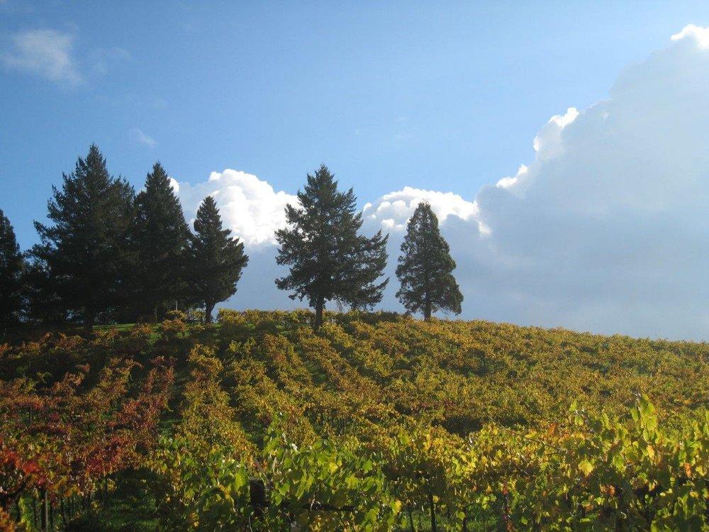 Acorn Winery (photo credit: Acorn)