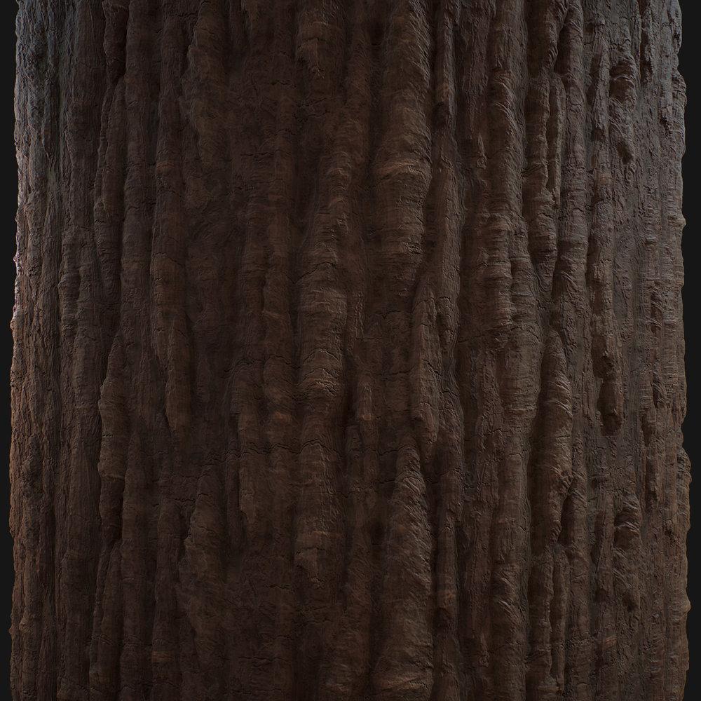 Bark_CloseUp.jpg