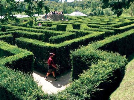 Leeds_Castle_ Maze.jpg