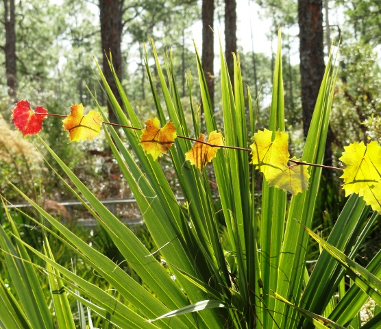 Mother nature's color palette at Corkscrew Swamp Sanctuary.JPG