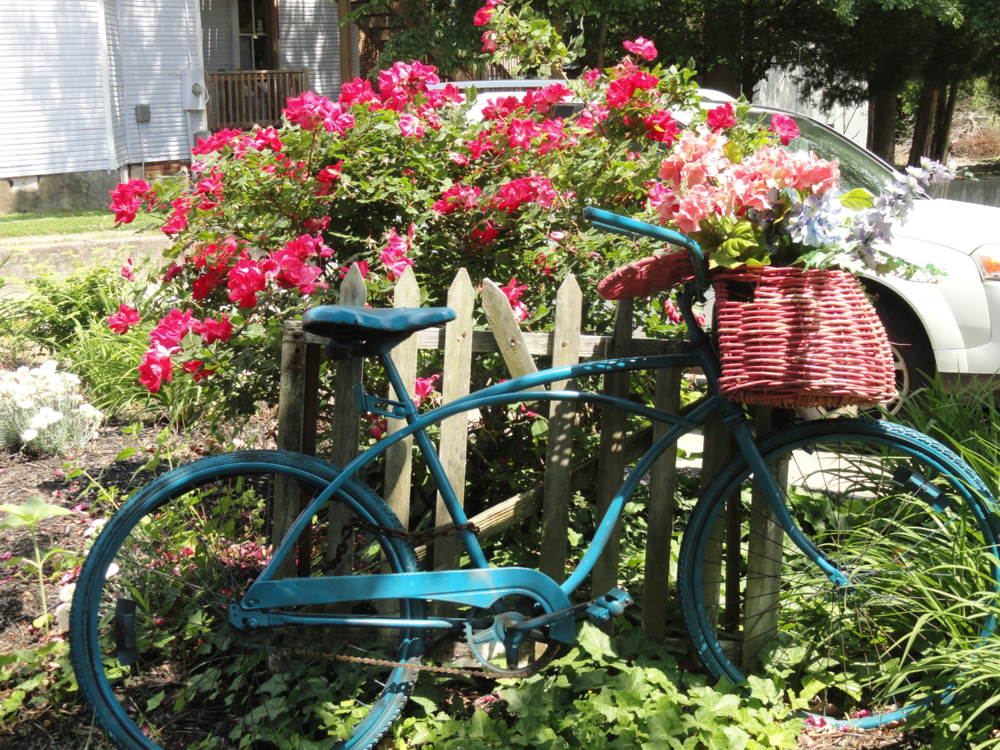 turquoise-bicycle-against-white-fenced-with-pink-spring-flowers
