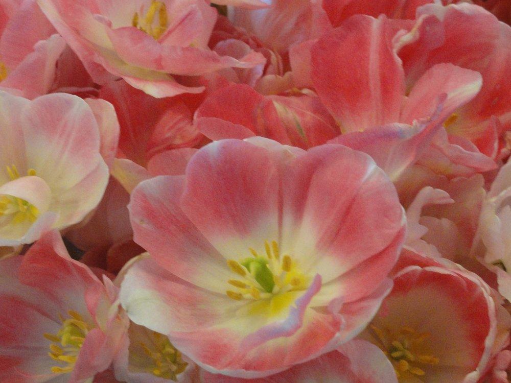 #3 Flowers (2) - Copy.JPG