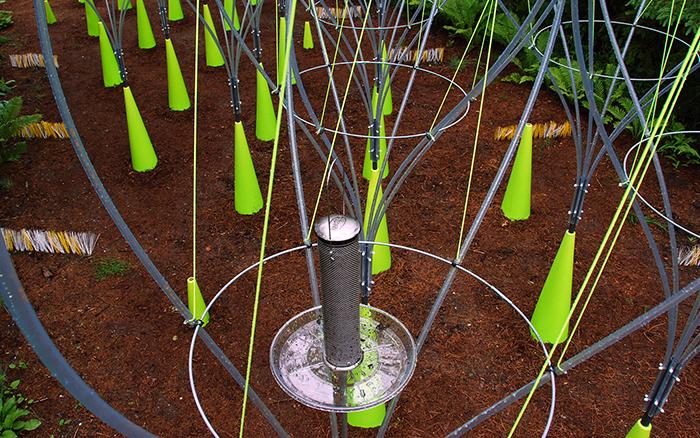 2009 - seedling - 2.jpg