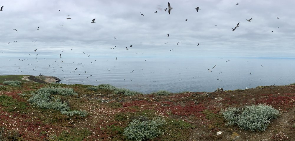 "Santa Barbara Island has been declared an ""Important Bird Area"" (IBA) by the National Audubon Society. After researching the resident birds and their calls, I wove parts of their songs into a woodwind, percussion, and marimba ensemble."