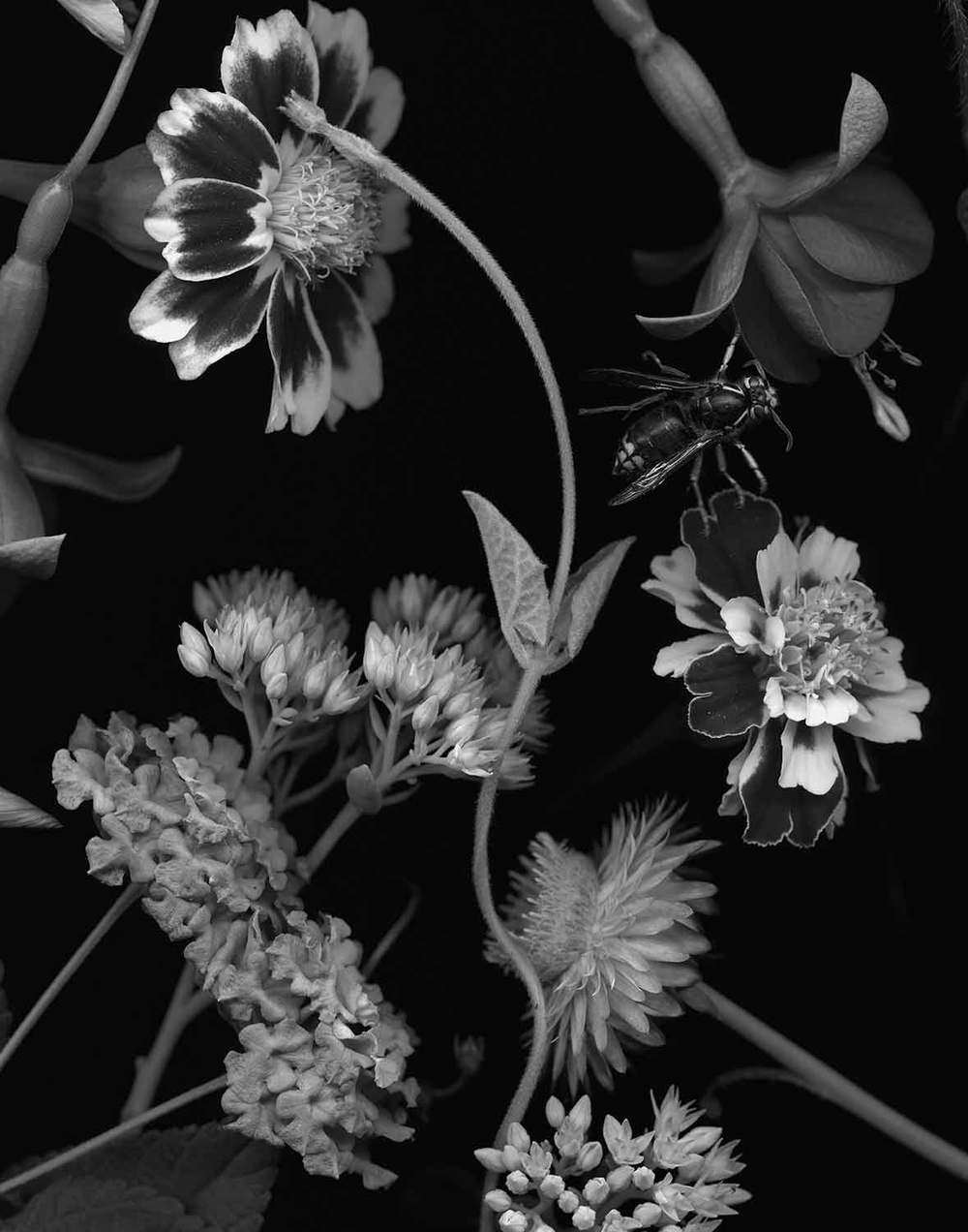 """Wasp and Marigolds, 2014. 11""""x14"""", archival pigment print. Edition of 20. At Camerawork Gallery."""