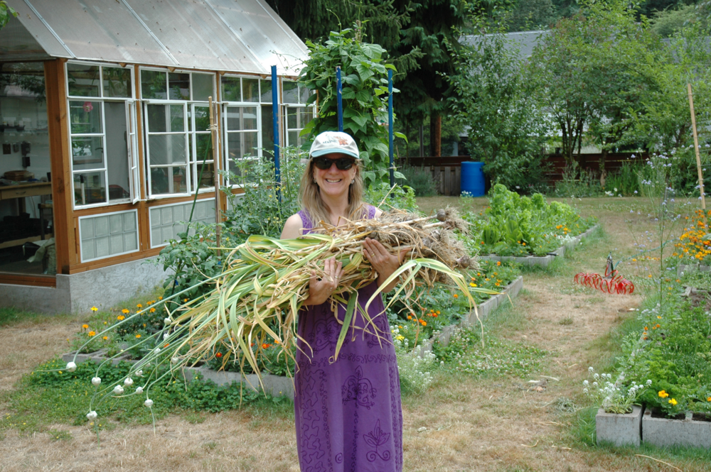 Garlic harvest from a few years back...