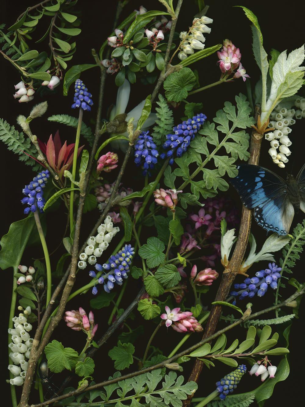"""""""Blue"""", archival pigment print, 30""""x40"""", 2015."""
