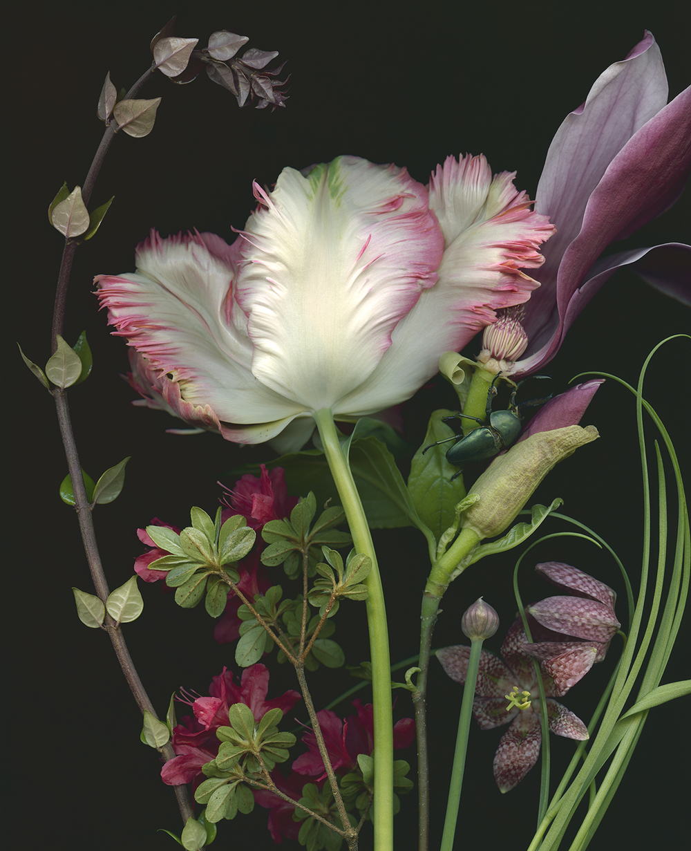 Tulip, Magnolia and Fritillaria