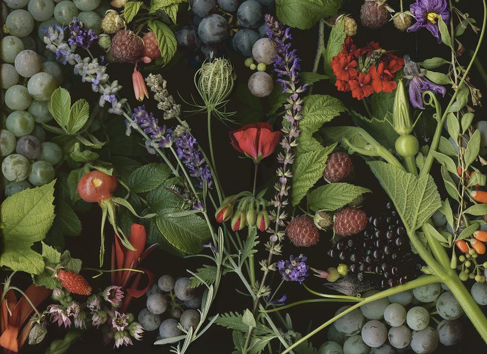 Killer Bee and Raspberries