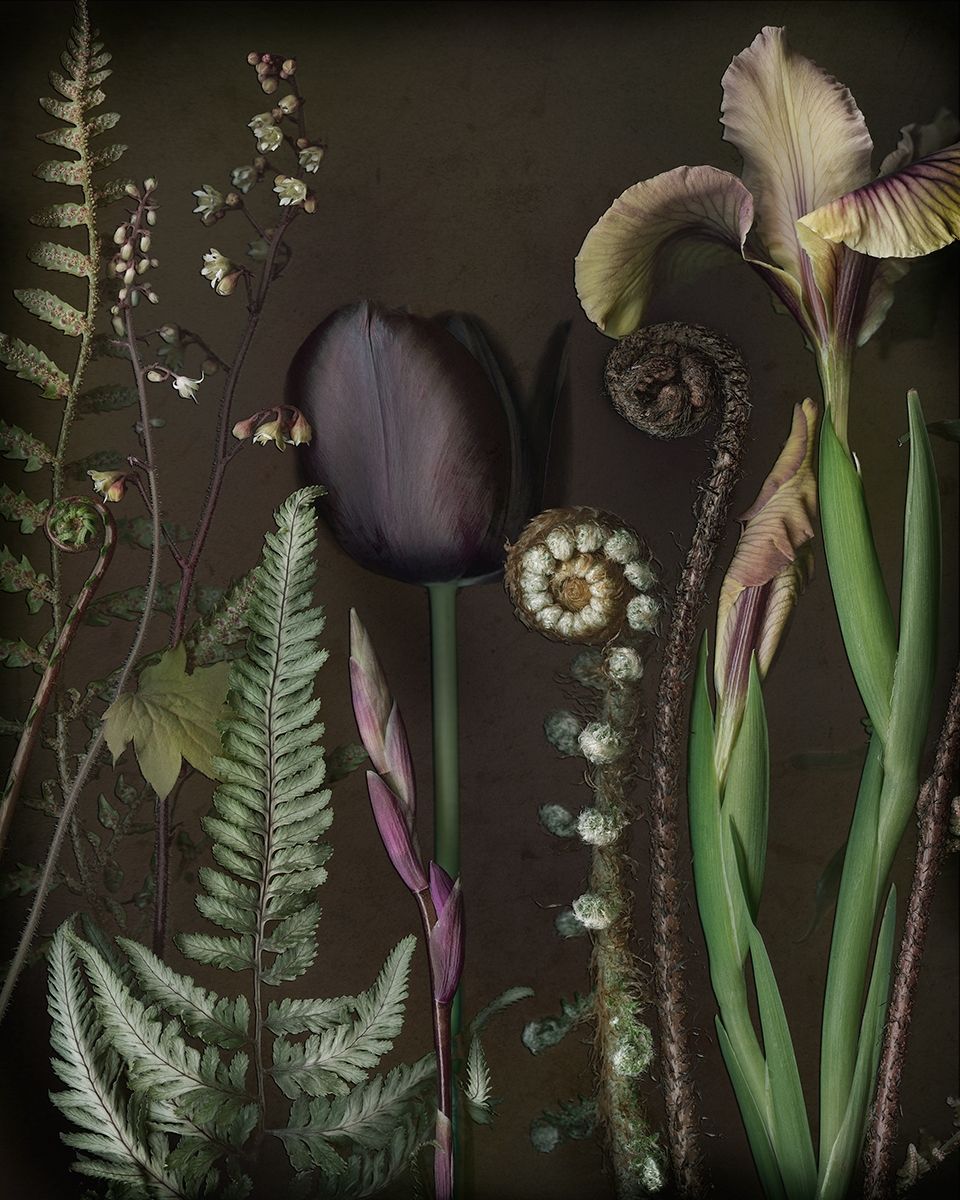 Tulip, Iris and Ferns