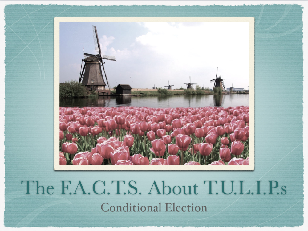 TheFactsAboutTulips.Title.png