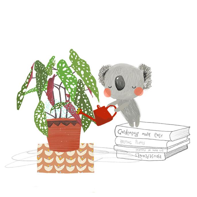 Koala wateringLR.jpg